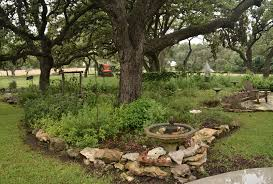 Backyard Habitat Wild About Flowers And Habitat Central Texas Gardener