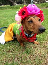 Halloween Costumes Wiener Dogs Frida Kahlo Dog Halloween Costumes Dog