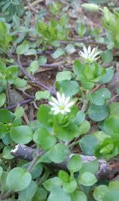 native american medicinal plants a walk in my mother u0027s secret garden u2026wild medicinal plants of the