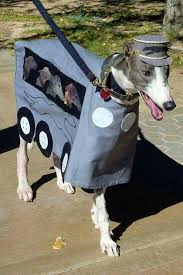 Halloween Costume Ideas For Pets 110 Best Great Costume Ideas For Pets U0026 People Images On Pinterest