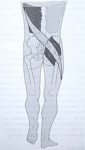 Anatomy And Physiology Of The Back Anatomy And Physiology