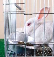 Indoor Hutch Diy Wire Rabbit Cages And Equipment Animals Grit Magazine