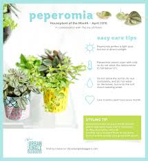 of the month april peperomia