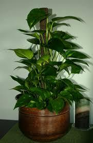 best house plants low light arts