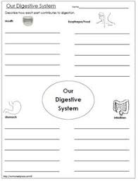 what is digestion worksheets cycling and body systems
