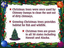 christmas tree facts casella u0027s trees