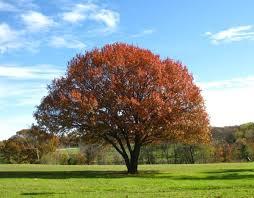releaf benefits of trees