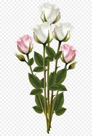 white and pink rose bouquet transparent png clip art image free