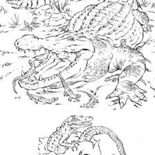 florida coloring pages u2013 coloring pages coloring pages
