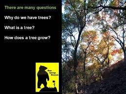 why do we need trees to survive
