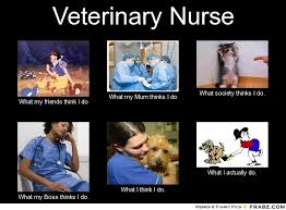Nurse Meme Generator - veterinary nurse meme generator what i do work pinterest