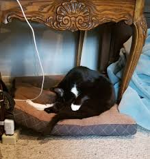 Cats In Dog Beds Stolen Dog Beds