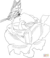 coloring pages of butterfly roses coloring pages free coloring pages