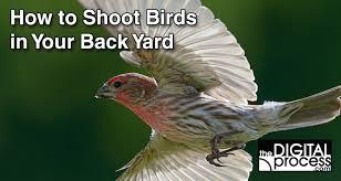 Birds In Your Backyard Get The Shot Backyard Bird Photography