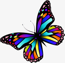 colorful butterfly colourful butterfly png image