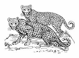 19 animals coloring images sketch free