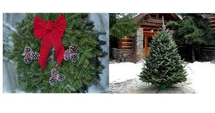 last chance 29 99 fresh wreaths and trees delivered free