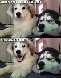 Dog Meme - labracadabrador what breed is it