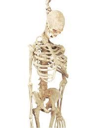 skeleton dog halloween prop 5ft latex skeleton costume accessories makeup decorations