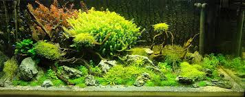 Plants For Aquascaping Adrie Baumann And Aquascaping Aqua Rebell