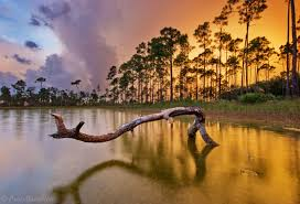 Florida national parks images Tree of the spirits everglades national park florida florida jpg