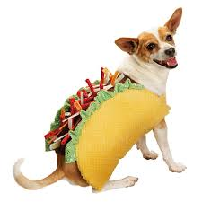 Taco Costume Dogs And Cats Wearing Taco Costumes Riot Fest
