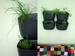 creating an indoor vertical herb garden with woolly pocket sweet