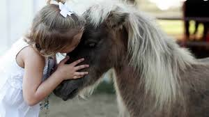 Family whose beloved pony was killed finds horse 39 s sister