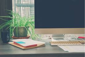 best plant for desk spring has sprung the 7 best plants for your office desk