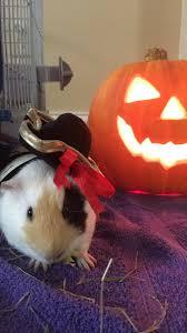 Animal Halloween Costumes Cats Dogs Halloween Costumes Bonus Pets