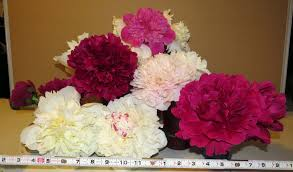 peonies for sale cut peonies for sale boreal peonies