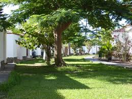 peaceful bungalow surrounded by tropical gardens 4289411