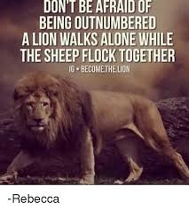 Lion Meme - dont be afraidof being outnumbered a lion walks alone while the