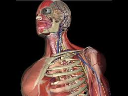 Picture Of Human Anatomy Body Human Anatomy Animation Youtube
