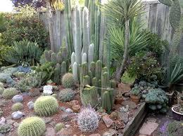 Cactus Garden Ideas Charming Cactus Garden Designs H52 About Home Decor