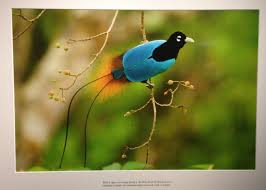 oh the birds of paradise visual literacy