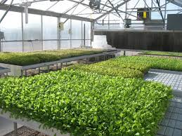 what to grow in a vegetable garden 15 most popular vegetables and fruits to grow in a green house