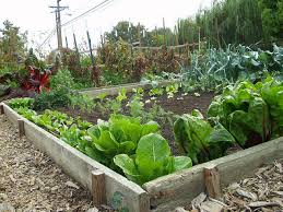 Garden Tips And Ideas Plain Decoration Simple Backyard Vegetable Garden Diy Awesome
