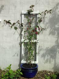 the tenacious gardener july 2013