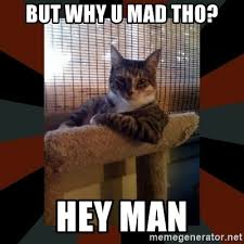 You Mad Tho Meme - but why u mad tho hey man the most interesting cat in the world