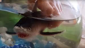 shark fish tank toy sharks shark aquarium youtube