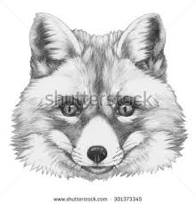 dog head breed border collie sketch stock vector 694496932