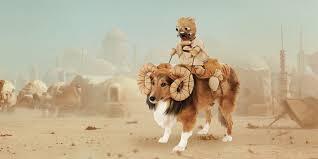 this u0027star wars u0027 bantha costume is your pet u0027s destiny