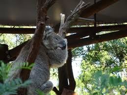 healesville sanctuary u2039 mama loves to share