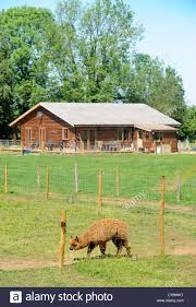 a log cabin or wooden chalet home on an alpaca farm a style of