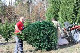 pining for a real tree alabama is shedding christmas tree farms
