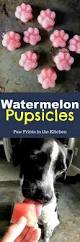 watermelon pupsicles recipe healthy homemade dog treats