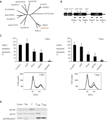 growth and cell survival are unevenly impaired in pixie mutant