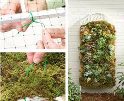 how to trellis moss garden from lowe u0027s moss wall moss garden