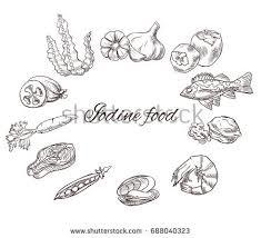 seaweed vector set download free vector art stock graphics u0026 images